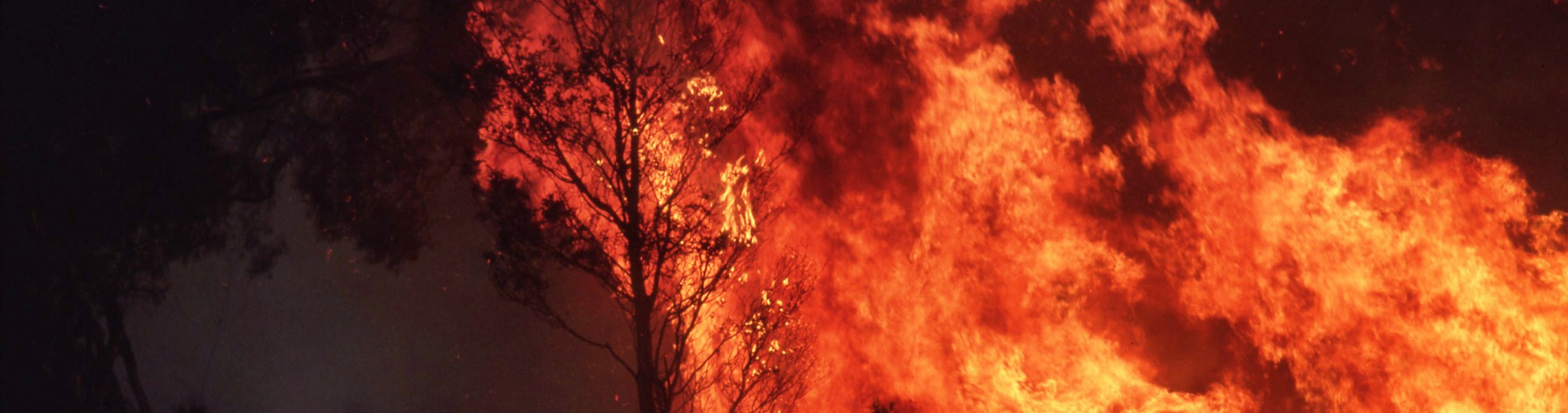 Fire ravaging trees in the dark