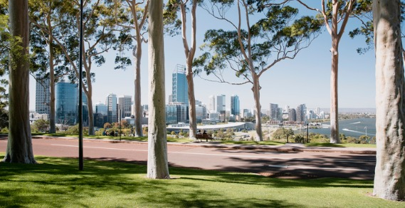 A view of Perth looking through trees