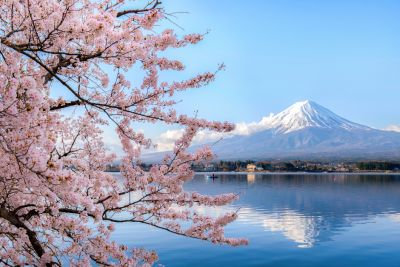 An image of a snow capped volcano behind a lake with cherry blossom blooms in the foreground.