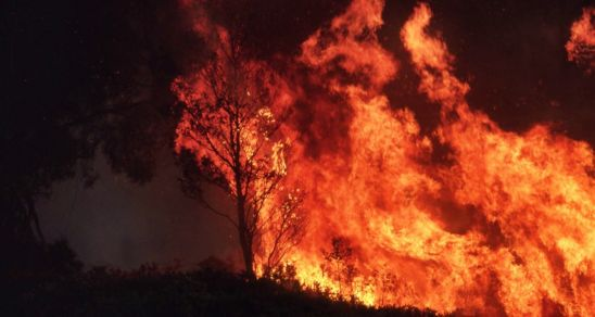 Out of control fire ravages trees