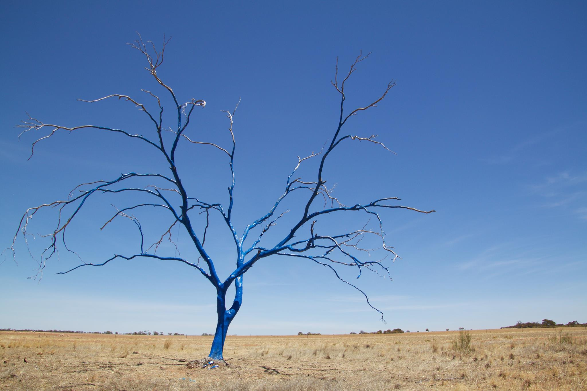 Image of a dead tree painted blue standing in barren dry paddock.
